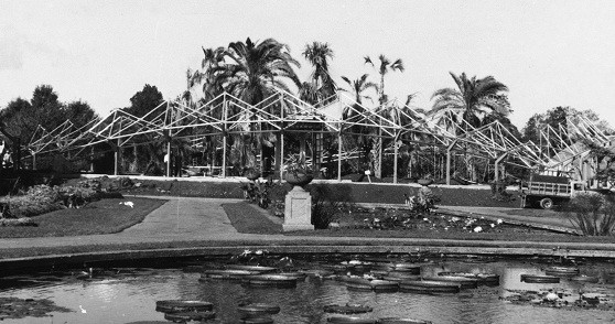 Framework for the Climatron rises around the garden's existing palm trees in 1959. - ARCADIAPUBLISHING.COM
