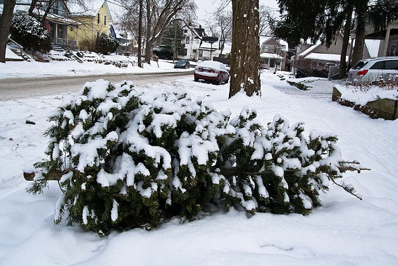 Recycle your Christmas tree! Don't just do this... - STEVEN DEPOLO VIA FLICKR
