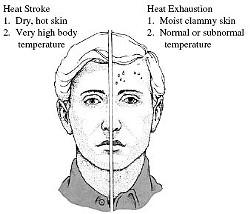 heat_stroke_v_heat_exhuastion.jpg