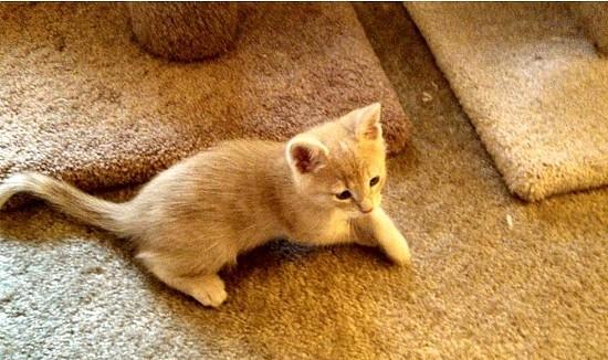 TENTH LIFE CAT RESCUE