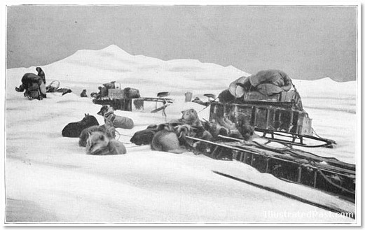 Amundsen's sled dogs preparing to leave base camp for the South Pole. - IMAGE VIA