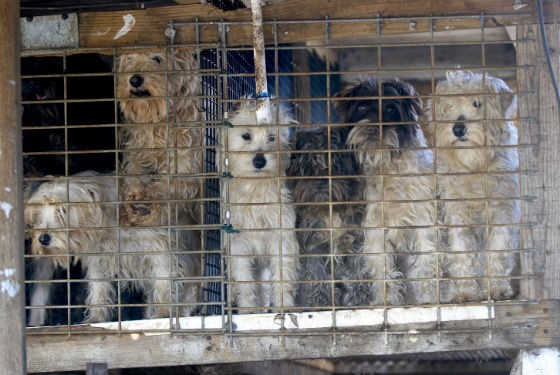 Newton County puppy mill in 2009. More photos below. - MIKE BIZELLI