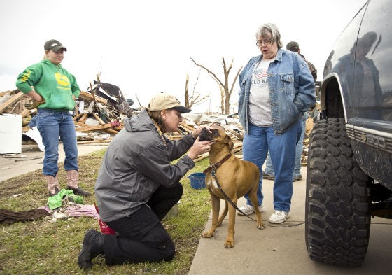 Dr. Julie Brinker, veterinarian at HSMO, checking out a victim of the Joplin tornado in May 2011.