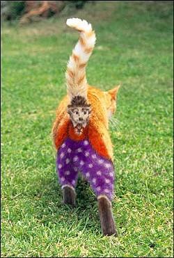 cat_ass_clown.jpg