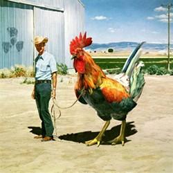 A cowboy with a very big, um, rooster. - IMAGE VIA