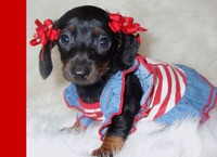 MOFED: THIS DOXIE WANTS YOU TO VOTE FOR AMERICA.