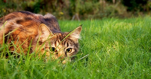 Sniff, sniff! Do we smell a stalker? - WIKIMEDIA COMMONS