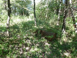 Some dubious-looking debris at the Strecker Forest site. - ENVIRONMENTAL STEWARDSHIP CONCEPTS