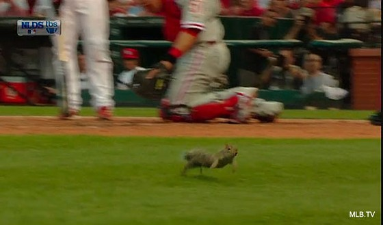 Perhaps if this squirrel were a moose, the Phillies would've won last night.