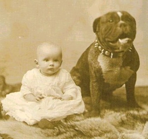 Missouri no likey people who are mean to pit bulls, baby. - WIKIMEDIA COMMONS