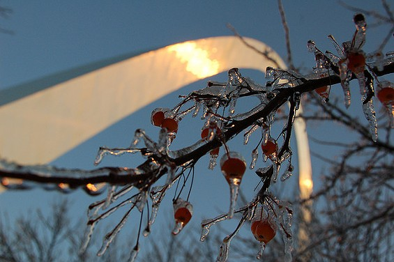 """It's going to be a """"berry"""" cold week, STL. - HERKIE ON FLICKR"""