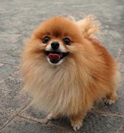 Readers agree, Joseph Bentley is a dog -- and not a cute one like the little Pomeranian he stomped to death last week.