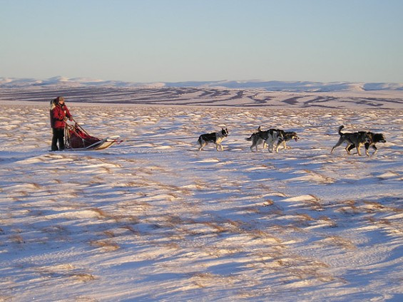 Jacquie Crawford drives a team of sled dogs across the Alaskan tundra. - IMAGE VIA