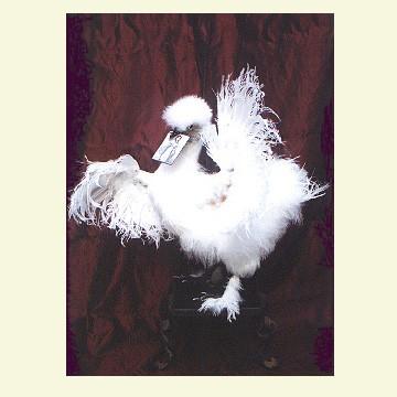 Esmeralda (Fortune-telling chicken) - A CASE OF CURIOSITIES