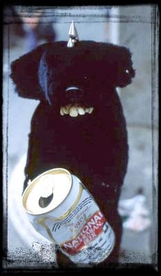 Kaiser the Punk Marmot by Robert Marbury - THE URBAN BEAST PROJECT