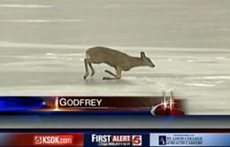 deer_on_ice.jpg