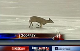 deer_on_ice.jpg