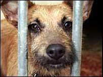 straydog2.jpg