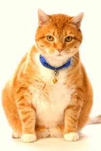 Thomas Faulkner on the Purina Cat Chow diet.