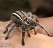 Meet spidermunk.