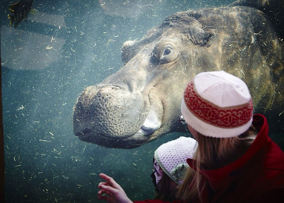 The Saint Louis Zoo is No. 1 in our hearts. - STEVE TRUESDELL