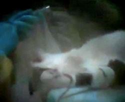 Undercover video. - VIA PETA