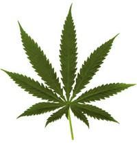 pot_leaf_big_thumb_200x210.jpg