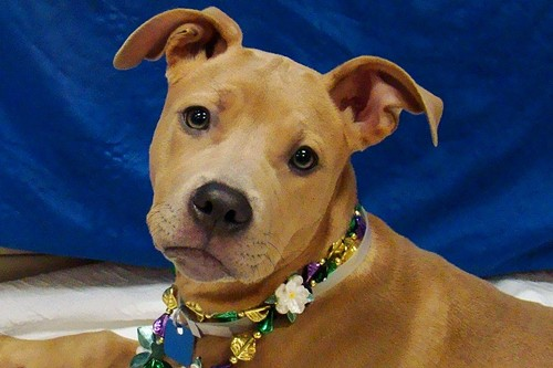 A happy, healthy Honor. - ST. LOUIS COUNTY ANIMAL CARE AND CONTROL