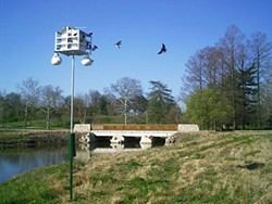 Purple Martins in Steinberg Meadow - Forest Park - JOHN MILLER