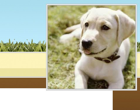 HTTP://ETERNAL-EARTHBOUND-PETS.COM/HOME_PAGE.HTM