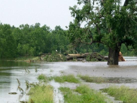 Recent flooding near St. Louis. - MISSOURI DEPARTMENT OF CONSERVATION