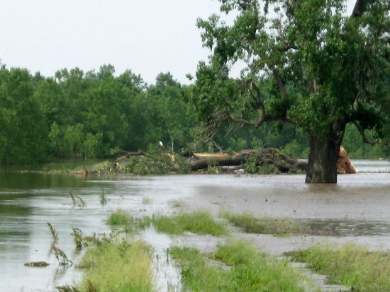 Recent flooding near St. Louis. - MISSOURI DEPARTMENT OF CONSERVATION