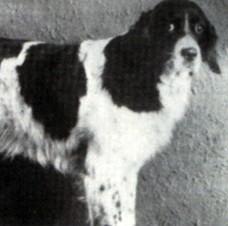 Missouri's magical dog. - VIA