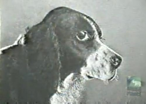Jim the Wonder Dog - VIA