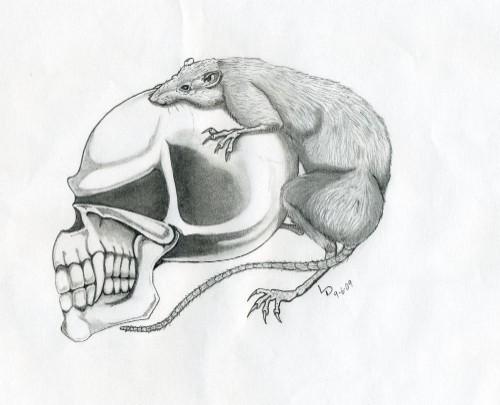 Skull with Rat, from Insider Art. - LARRY DANIELS