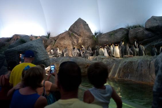 penguin2_jongitchoff.jpg