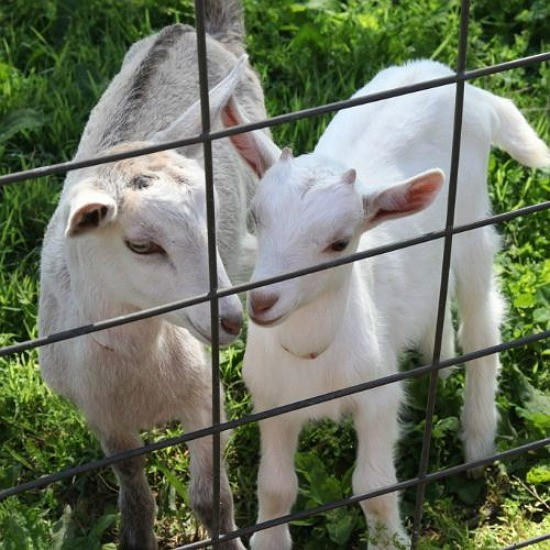 Kids like these two were bottle fed by hand by Veronica and Steve. - BETH FARROW CLAUSS