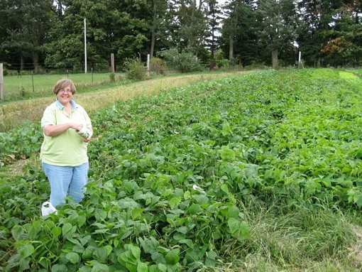 Field of beans: A green CSA vista, courtesy of La Vista in Godfrey, Illinois. - WWW.LAVISTACSA.ORG