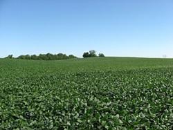 Soybeans ain't free, folks. - IMAGE VIA