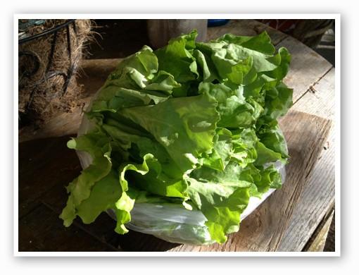 Butter Crunch: A gorgeous head of fresh, crisp lettuce for $3 bucks.   Zach Garrison