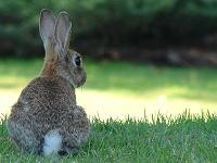 rabbit011209.jpg