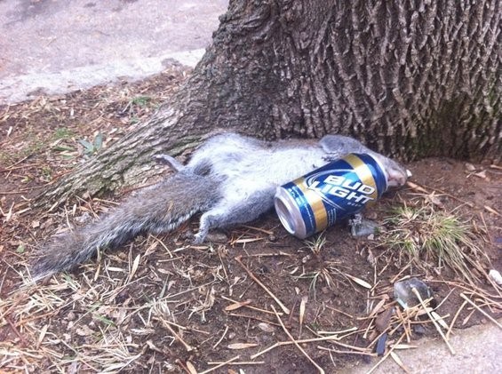 St. Louis: Where the squirrels go to hide their Everclear! - DAILY RFT
