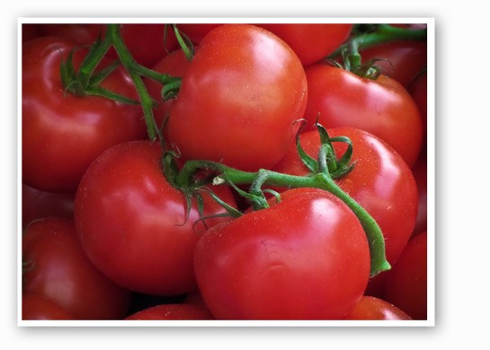 Tomatoes really are the best. | Garry Knight