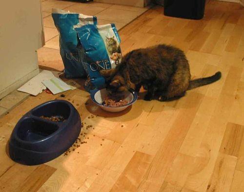 The fanciest of feasts.