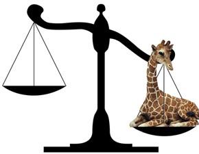 giraffe_on_scale.jpg
