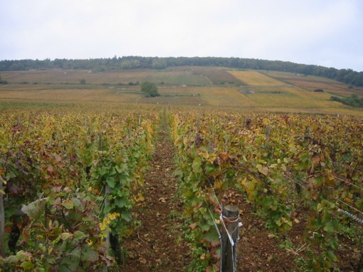 Vineyards in Gevrey-Chambertin, birthplace of today's featured wine. - WIKIMEDIA COMMONS