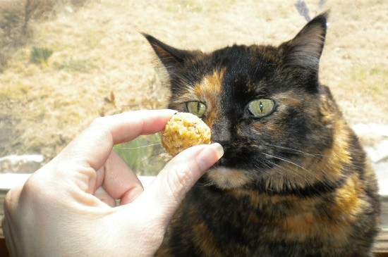 Yma, another treat-taster - DEBORAH HYLAND