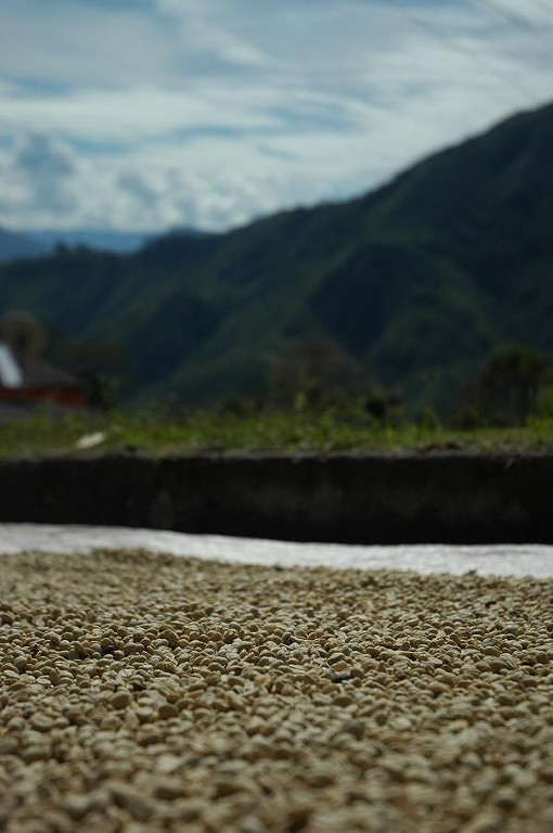 Coffee in parchment drying atop Monserrate - COURTESY MIKE MARQUARD