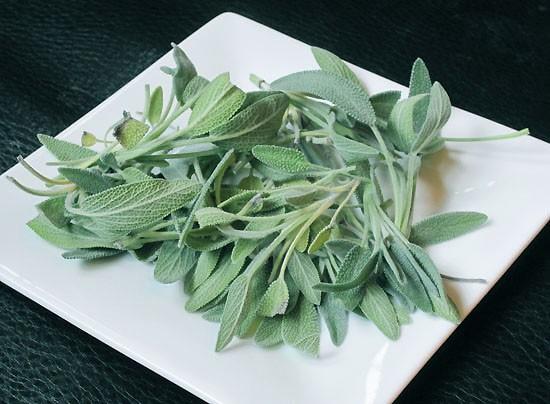 Fresh sage leaves. - KRISTIE MCCLANAHAN