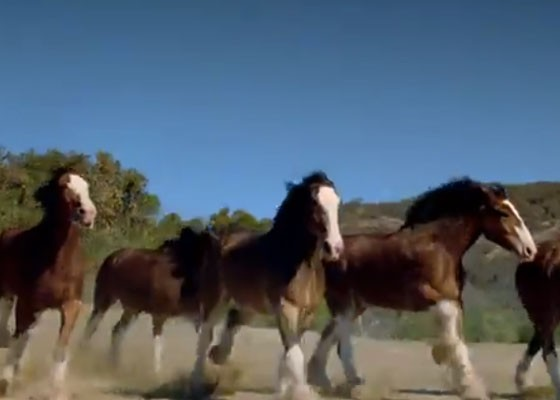 Oh, those crazy Clydesdales. | YouTube screenshot